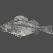 Chills & Thrills Fish Chalk Skeleton Stamp