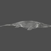 Chills & Thrills Gator Chalk Skeleton Stamp