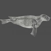 Chills & Thrills Seal Chalk Skeleton Stamp