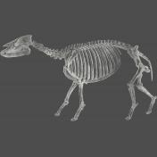Chills & Thrills- Animal Chalk Skeleton Stamp 3