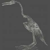 Chills & Thrills- Bird Chalk Skeleton Stamp
