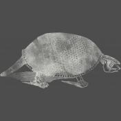 Chills & Thrills- Turtle Chalk Skeleton Stamp 2