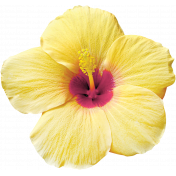 Unwind Mini Kit- Yellow Hibiscus