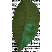 Unwind Mini Kit- Leaf
