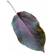 Cozy Day- Leaf