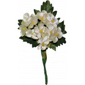 Memories and Traditions- White Flower Cluster