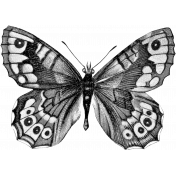 Butterfly Template 061
