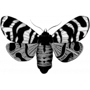 Butterfly Template 062