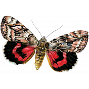 Spring Day- Red and Black Butterfly