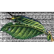 Spring Day- Leaf with Catapillar