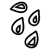 Seed Doodle Template 001