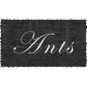 Slice of Summer- Ants Word Art