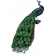 At the Zoo - Peacock Ephemera 01