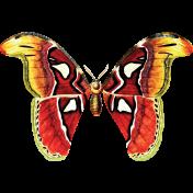 Apple Crisp- Butterfly