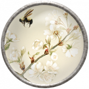 Apple Crisp - Apple Blossom Brad 11