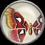 Apple Crisp- Butterfly Brad