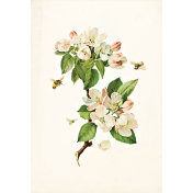 Apple Crisp- Apple Blossoms Ephemera 02