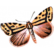 Day of Thanks- Orange Butterfly 02