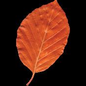 Day of Thanks- Orange Leaf