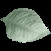 Fresh- Leaf 02
