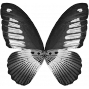 Butterfly Template 014