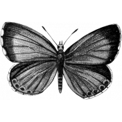 Butterfly Template 018