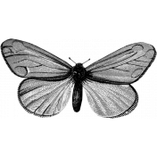 Butterfly Template 017