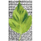 Our House- Leaf