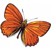 Our House- Orange Butterfly