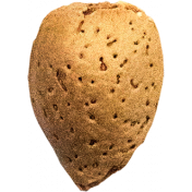 The Nutcracker- Almond 2
