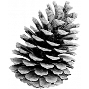 Pinecone Template 4