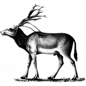 Deer Stamp Template
