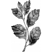 Leaves Stamp Template