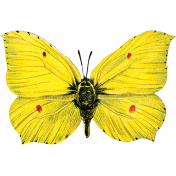 Reflections of Strength - Yellow Butterfly