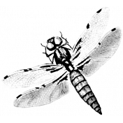 Insect Stamp Template 030