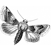 Insect Stamp Template 052
