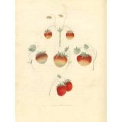 Strawberry Fields- Journal Card 5