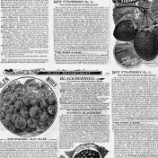 Newspaper Texture 010
