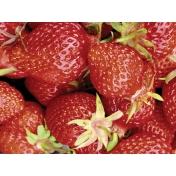 Strawberry Fields- Journal Card 13