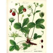 Strawberry Fields- Journal Card 16