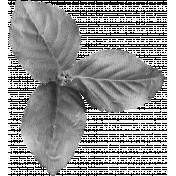 Leaf Cluster Template 004
