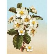 Strawberry Fields- Journal Card 20