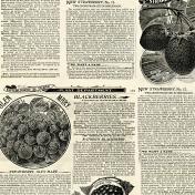Strawberry Fields- Newsprint 2 Paper