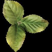 Strawberry Fields- Leaf Cluster
