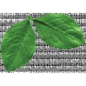 Strawberry Fields- Leaf Cluster 2