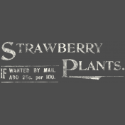 Strawberry Fields- Chalk Advertisement 01