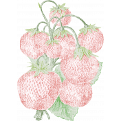 Strawberry Fields- Chalk Strawberry Stamp 08