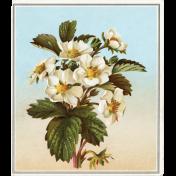 Strawberry Fields- Strawberry Flower Card
