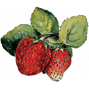 Strawberry Fields- Strawberry Sketch 2