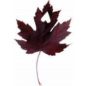 Falling For You- Purple Leaf 1